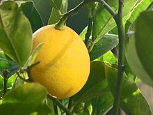 220px-Meyer_Lemon.jpg